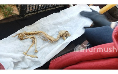 Life in rural Kyrgyzstan: Man found skeleton of animal that he thinks resembles small dinosaur