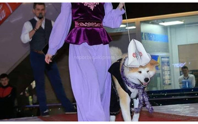 Putting Kyrgyz traditional hat on a dog during dog show sparks controversy, police looking into any violations