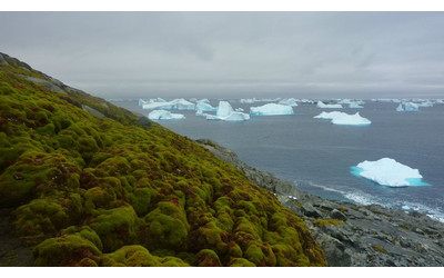 Antarctica is beginning to turn green due to global warming