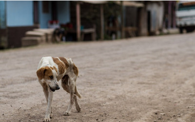 Turkmenistan opens first animal shelter ahead of Asian Games