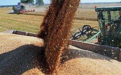 Kazakhstan's grain harvest in 2016 record high - 23.1 mln tons
