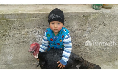Life in rural Kyrgyzstan: Video showing 4yo boy from Nookat breaking up a fight of 2 turkeys goes viral